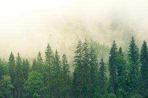 création écologique